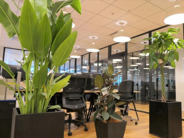オフィス内には、冷蔵庫、チェスト、アレクサ、観葉植物など快適に過ごせるアイテムが揃っています。